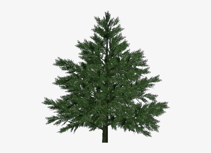 3d Trees - Pine - Pine Tree For Christmas, transparent png #1119345