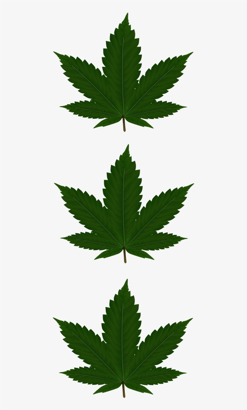 Cannabis Leaves Three - Addicted, Addidas Phone Case - Iphone 4/4s, transparent png #1120052