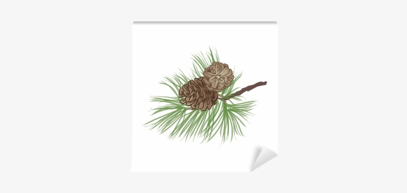 Pine Tree Branch - Pine Cone O Branch, transparent png #1123445