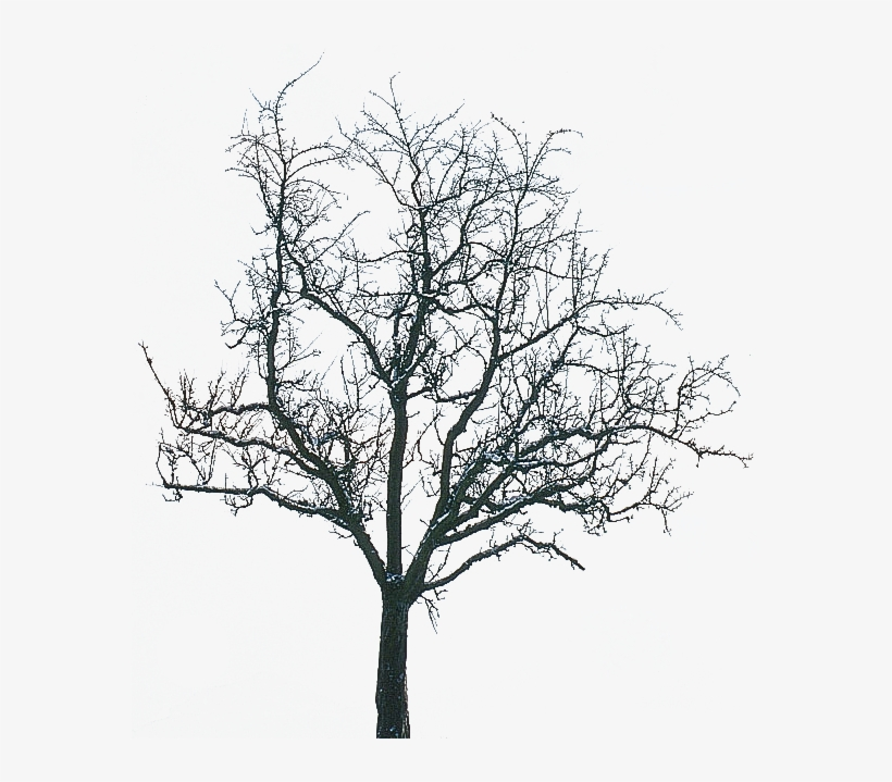 What You Need In Winter For Trend - Transparent Winter Tree Png, transparent png #1138977