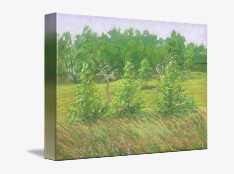 Windy Grass, transparent png #1140509