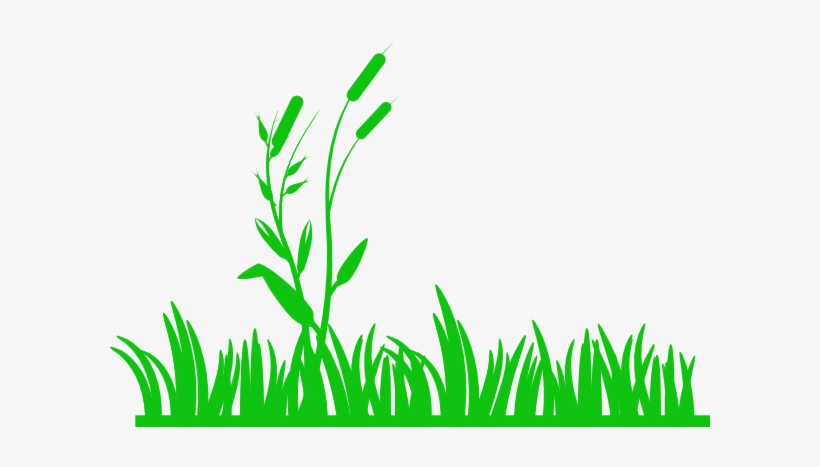 Png Transparent Library Green With Reeds Clip Art At Meadow Clip Art Free Transparent Png Download Pngkey