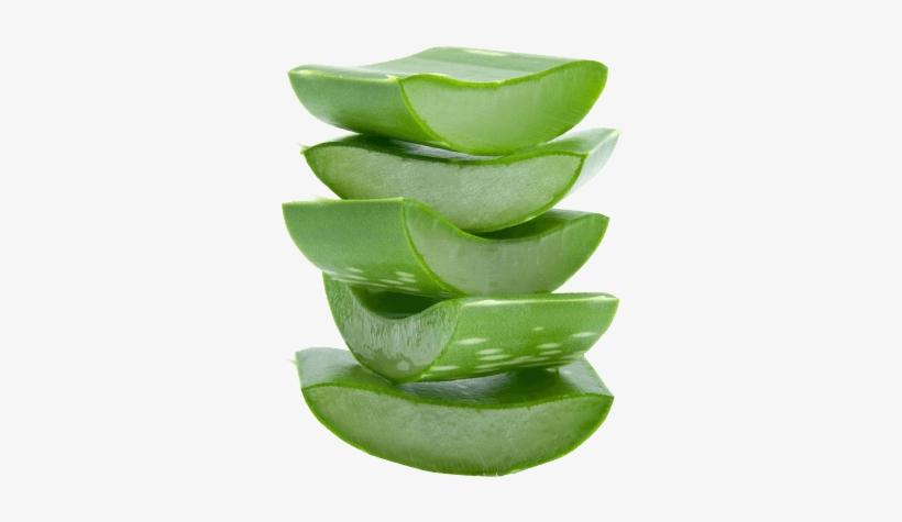 Aloe Vera - Aloe Vera Leaf Png, transparent png #1166325