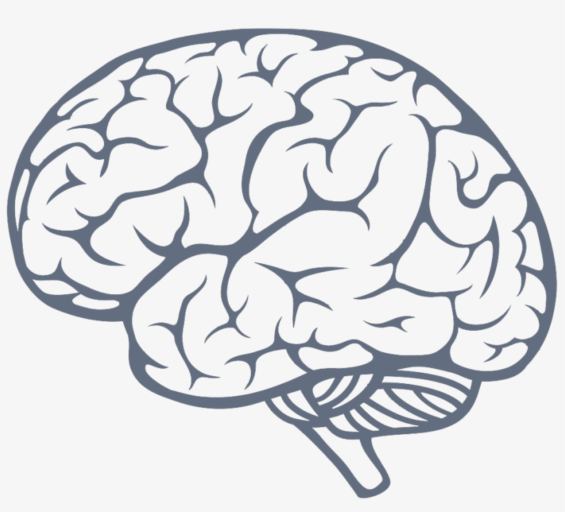 simple brain drawing at getdrawings brain png free transparent png download pngkey simple brain drawing at getdrawings