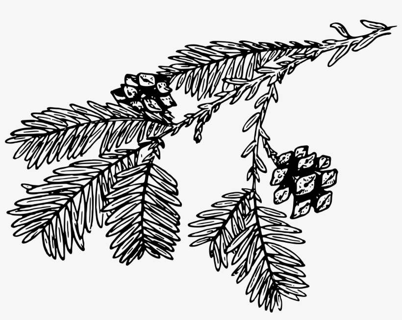 Transparent Download Big Image Png - Pine Branch Black And White Png, transparent png #1173863