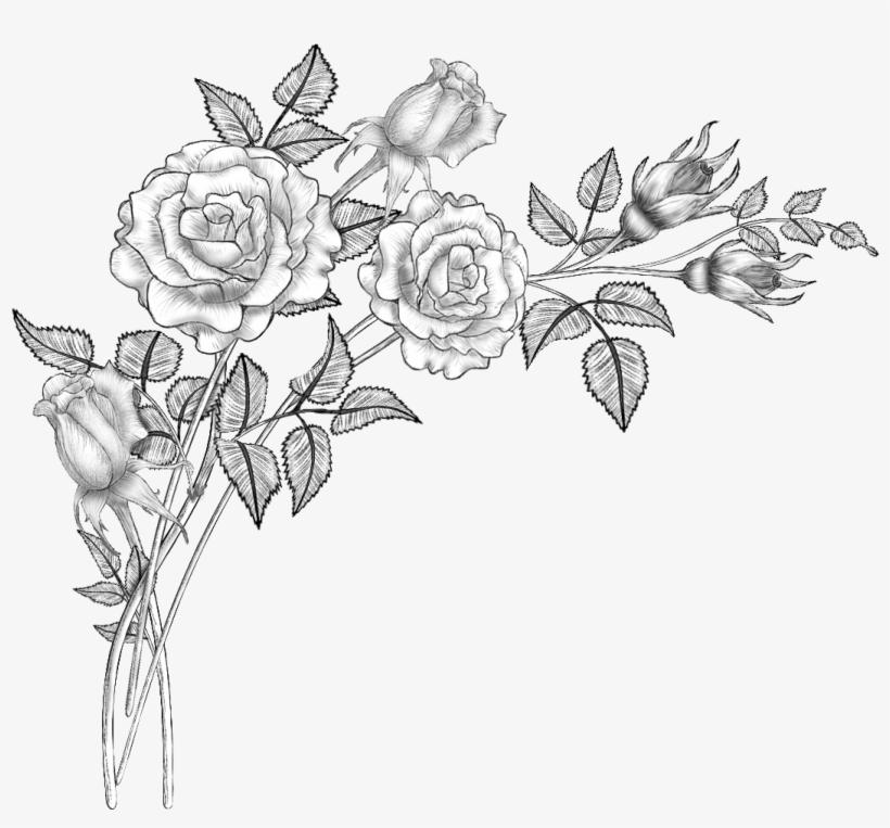 Floral Design Line Art Drawing Sketch - Flower Brushes, transparent png #1180499