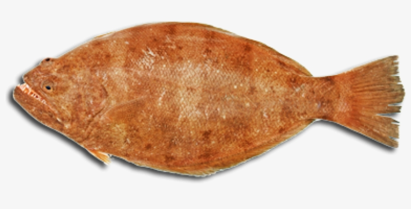 With The Exception Of Halibut, And Some Large Flounders - Portable Network Graphics, transparent png #1188949