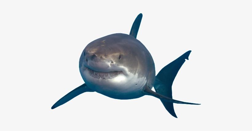 Shark Transparent Png - Great White Shark Shark Png, transparent png #1199974