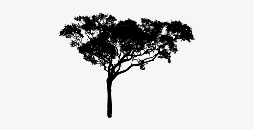 Tree Plant Vegetation Nature Silhouette Ec - African Tree Silhouette Png, transparent png #120448