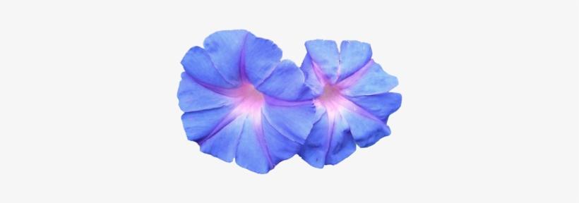 Vaporwave flower. Png pack blue flowers
