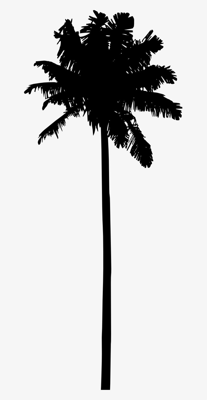 Free Png Palm Tree Silhouette Png Images Transparent - Palm Trees Silhouette Png, transparent png #124629