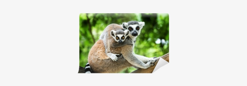 Wild Animals Animal Planet Animal Bites, transparent png #1202863