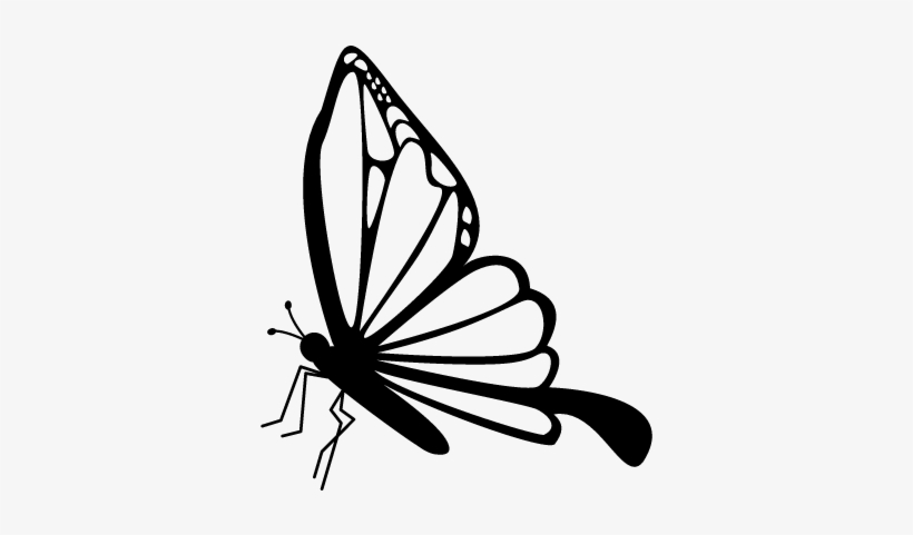 Butterfly Side View Vector - Butterfly Side View Drawing, transparent png #1203584