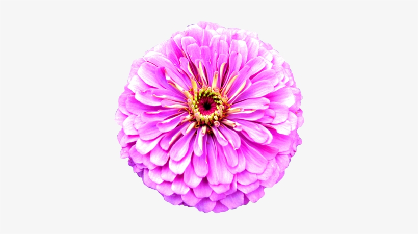 Flower Image Gallery Flower - Clipart Of Real Flowers, transparent png #1210676