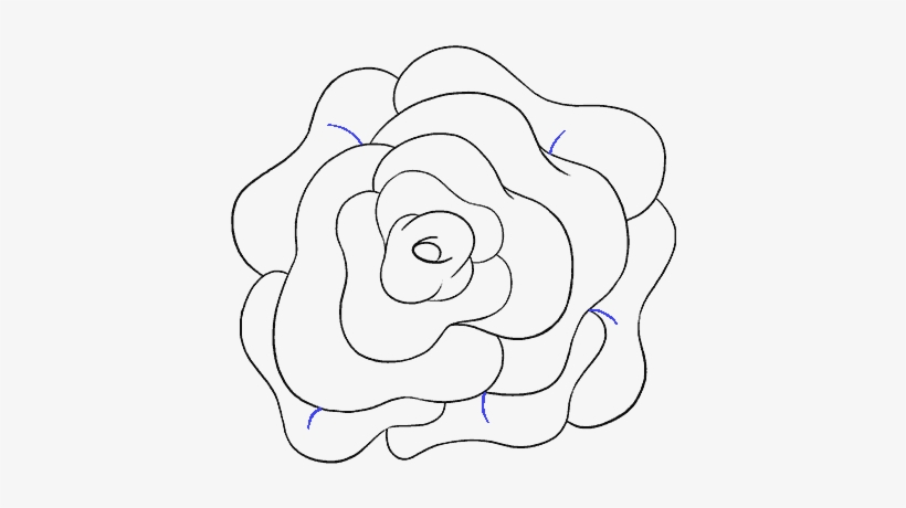How To Draw Rose Flower Step Drawing Free Transparent Png