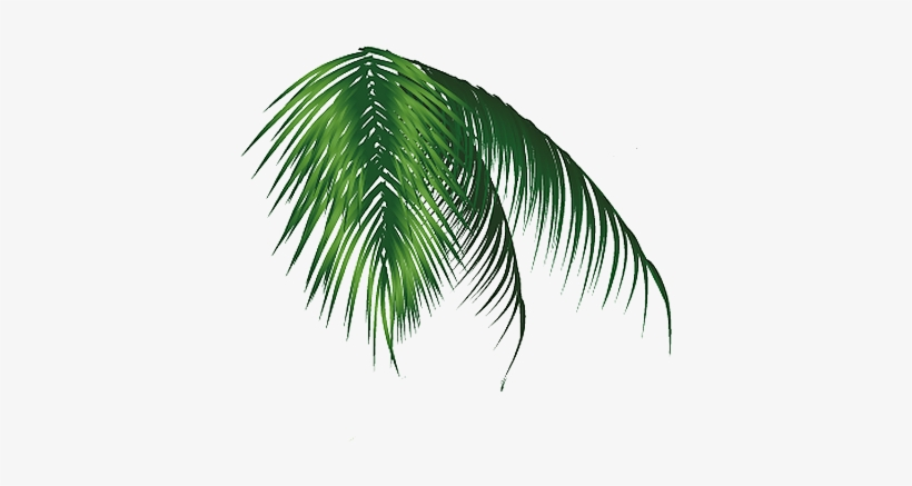 Hoja Palmera Png Coconut Free Transparent Png Download Pngkey