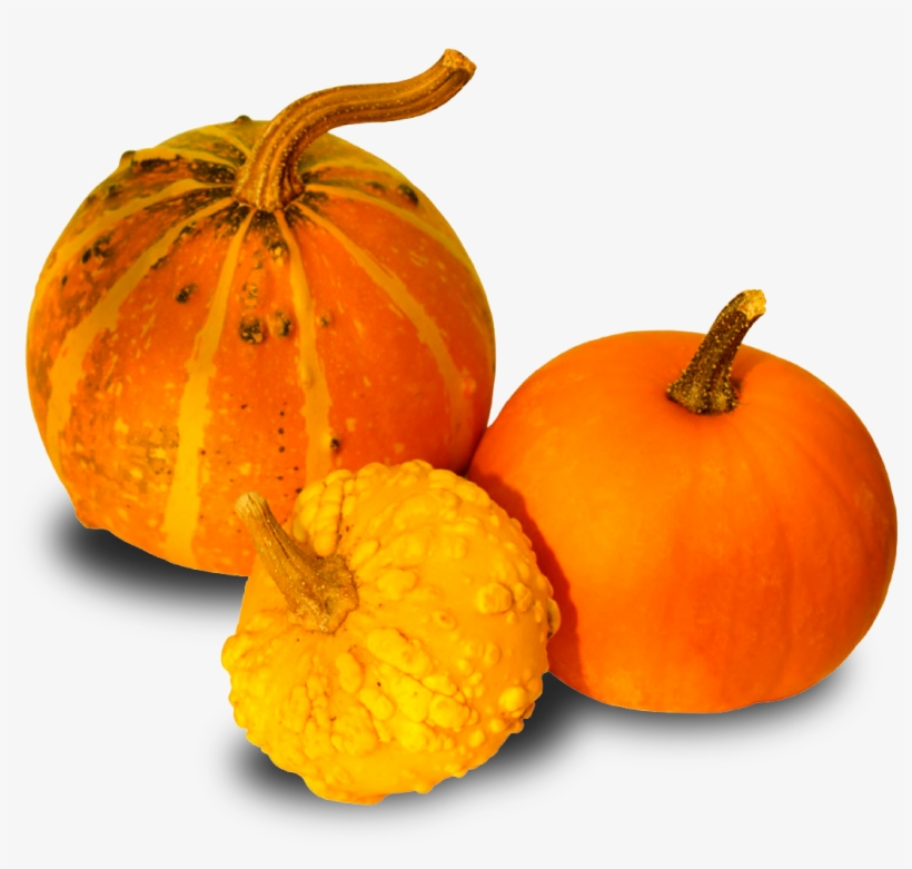 Contacto - Pumpkins And Gourds Png, transparent png #1296931