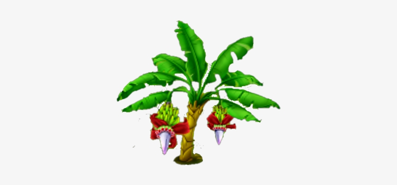 Clip Art Of Banana Leaf Clipart Banana Tree Images Png Free