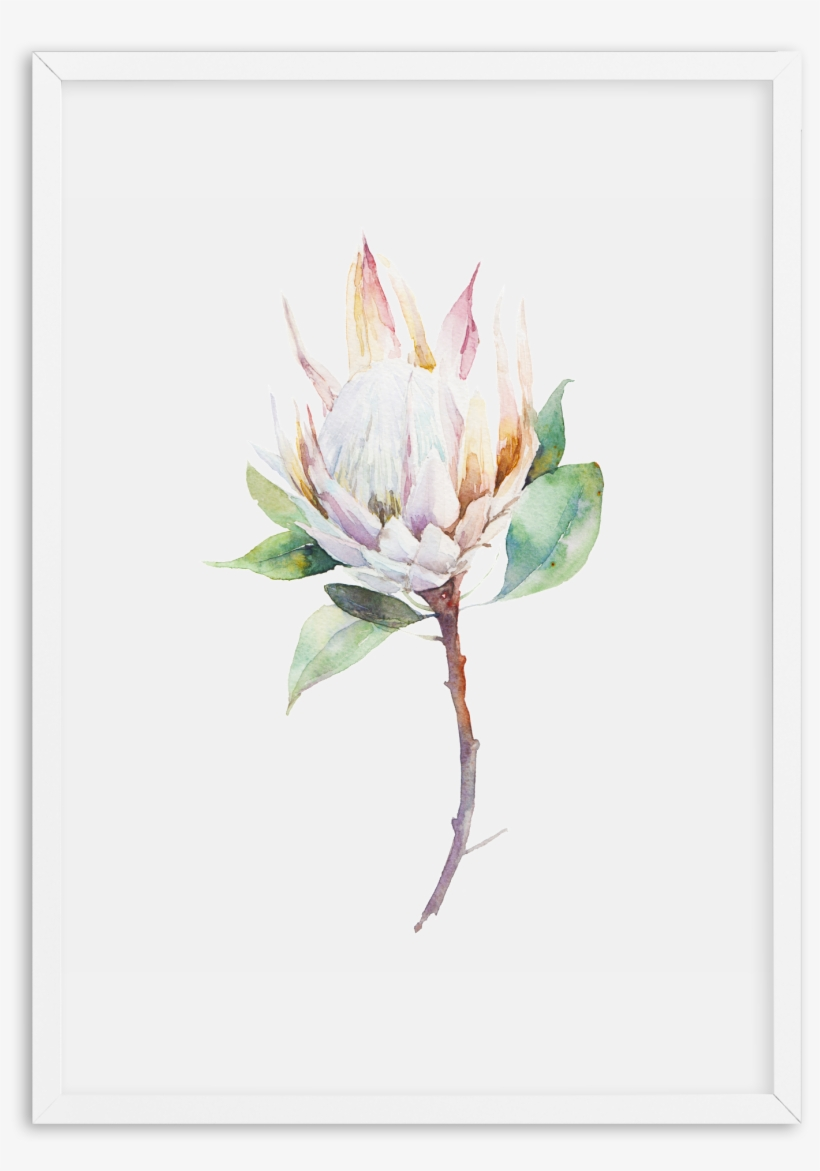 Protea In Watercolour Protea In Watercolour Protea - Cool Botanical Canvas Wall Art Frame: Natural, transparent png #131009