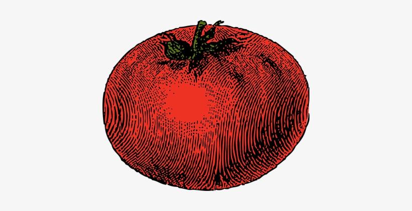 Tomato Vegetable Red Tomato Tomato Tomato - Tomato Clip Art, transparent png #134686