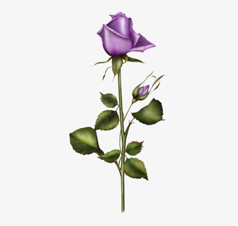 Tubes Fleurs - Flower, transparent png #1344122