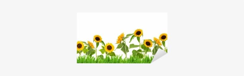 Sun Flower Garden Clip Art, transparent png #1357726