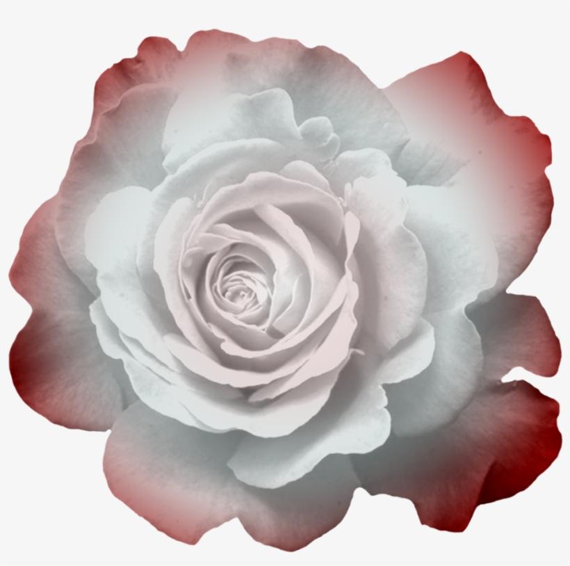 Transparent Flowers, Button Flowers, Clip Art, Photoshop, - Flower, transparent png #1369912