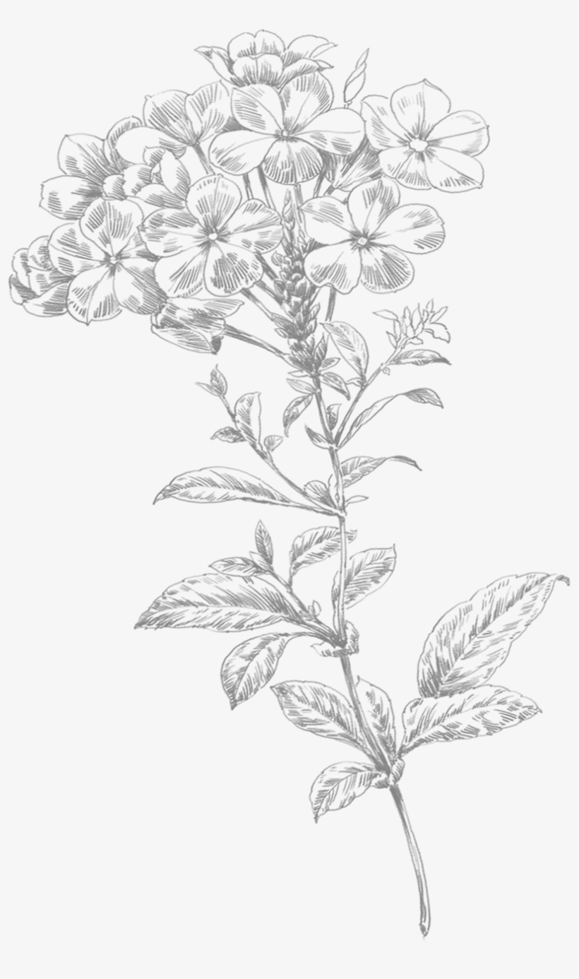 Line Art Flower Small - Flower Drawing Png, transparent png #1388679