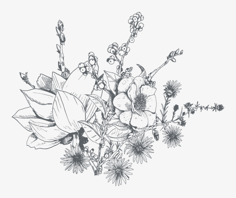 Clip Art Freeuse Amaryllis Drawing Orchid Flower - Dainty Flower Drawing Transparent, transparent png #1389512