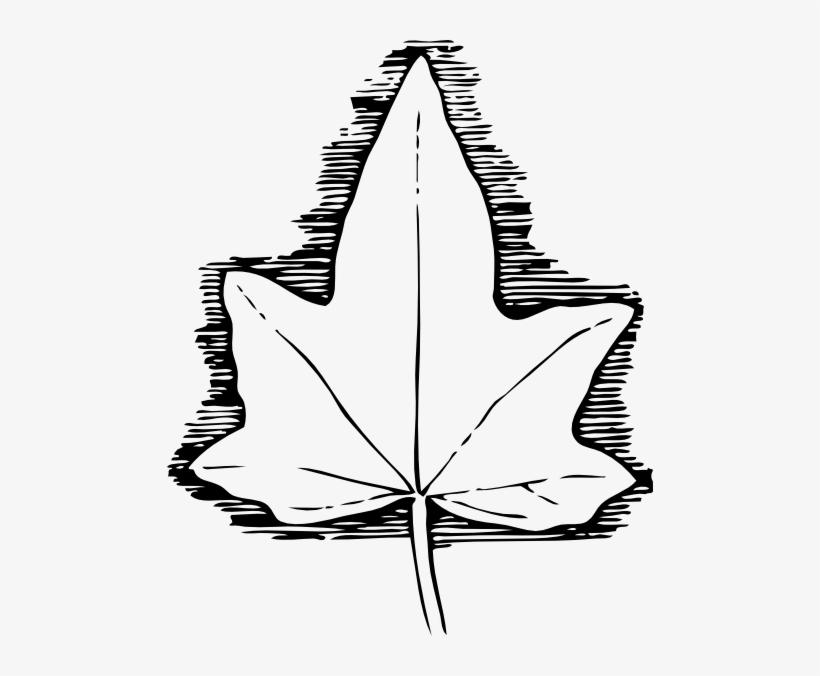 Ivy Leaf Clip Art At Clker - Ivy Leaf Template, transparent png #1390479