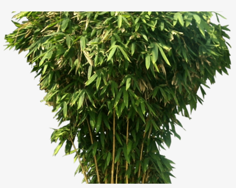 Bamboo Png Transparent Images - Cb Background Hd New 2018