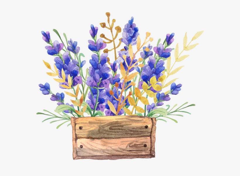 English Lavender Watercolor Painting Flower Drawing - Watercolor Flowers In A Box, transparent png #141704