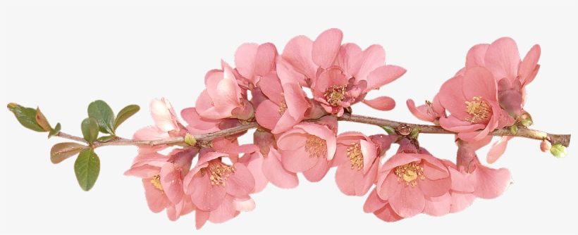 Spring Flowers Spring Flower Clip Art Clipart Spring Flowers