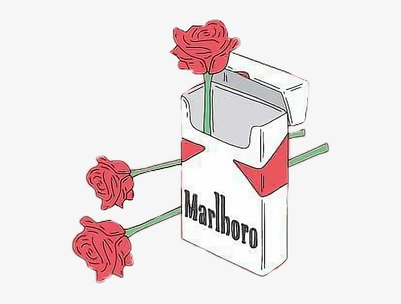 Aesthetic Png Tumblr Freetoedit Marlboro Rose Free Transparent