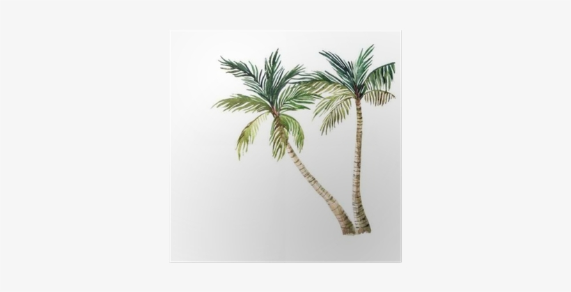 Palm Tree Isolated On White Background - Watercolor Palm Tree, transparent png #143740