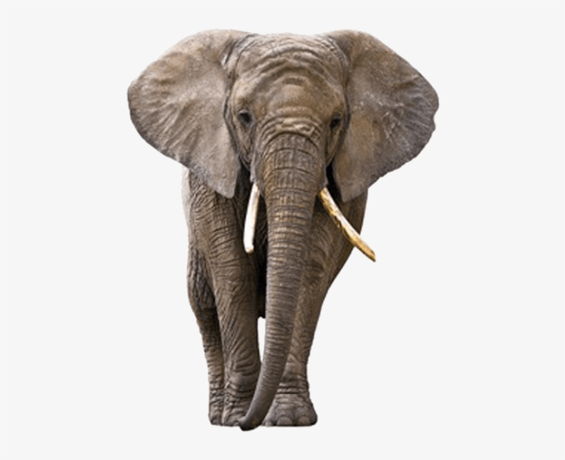 Free Png Elephant Png Images Transparent Elephant Png Free Transparent Png Download Pngkey Elephant png, download png alpha channel clipart images (pictures) with transparent background, elephant png image: free png elephant png images