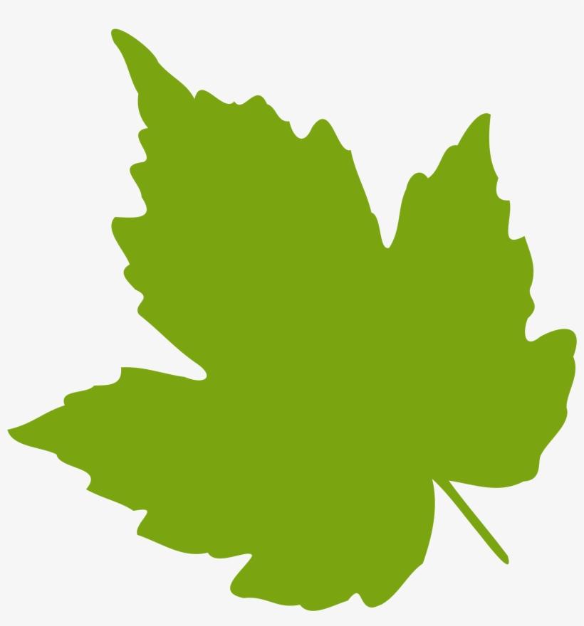 Leaf Clipart Ivy Leaf - Grape Leaf Clip Art, transparent png #146371