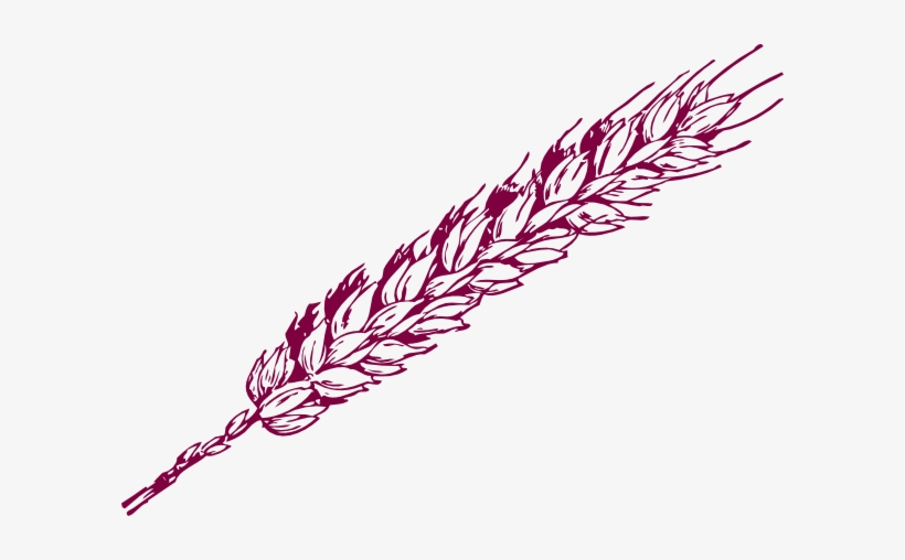 Clip Library Library Drawing At Getdrawings Com Free - Wheat Clip Art, transparent png #147749