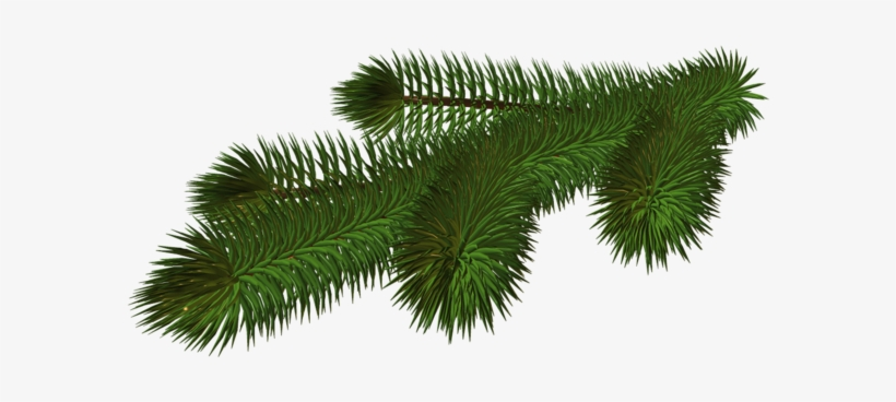 0, - Christmas Tree Branch Png, transparent png #149869