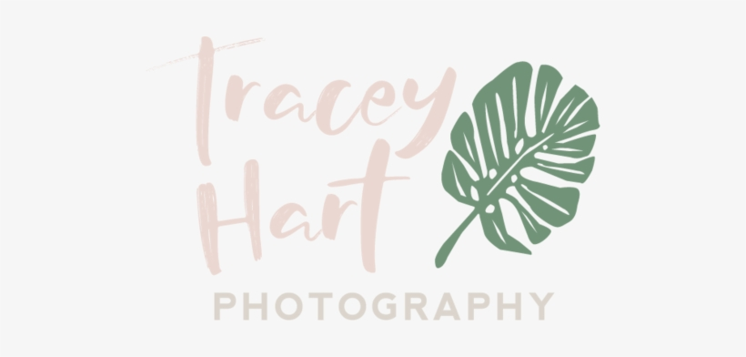 Creative Photography Logo Ideas Png Jpg Freeuse Library - Library, transparent png #1434156