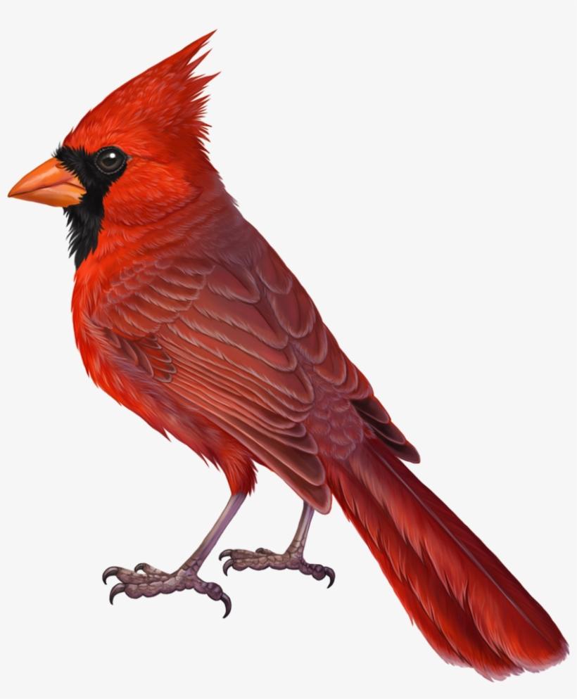 20+ Beautiful Bird Pencil Drawings, Art Ideas | Design ...  |Cardinal Bird Drawings