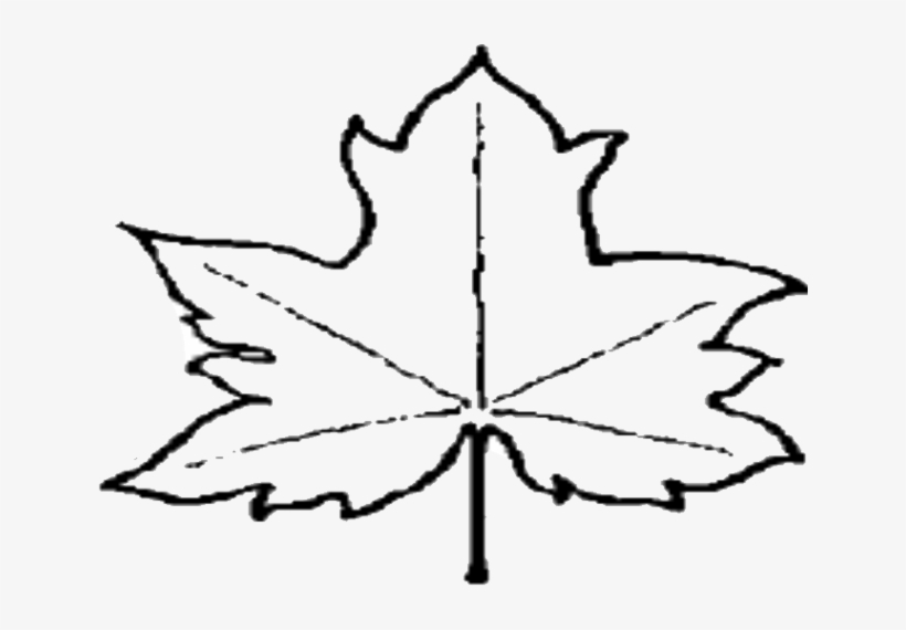 Leaf Outline Pictures Clipart Free To Use Clip Art - Leaf Outline Png File, transparent png #1445940