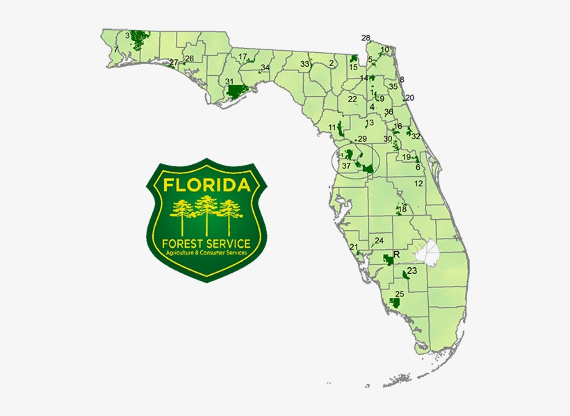 Detail Map Of Florida.National Forest Map Florida Free Transparent Png Download Pngkey