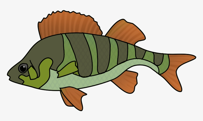 Collection Of School Of Tropical Fish Drawing High - Fish Drawing Png, transparent png #1450626