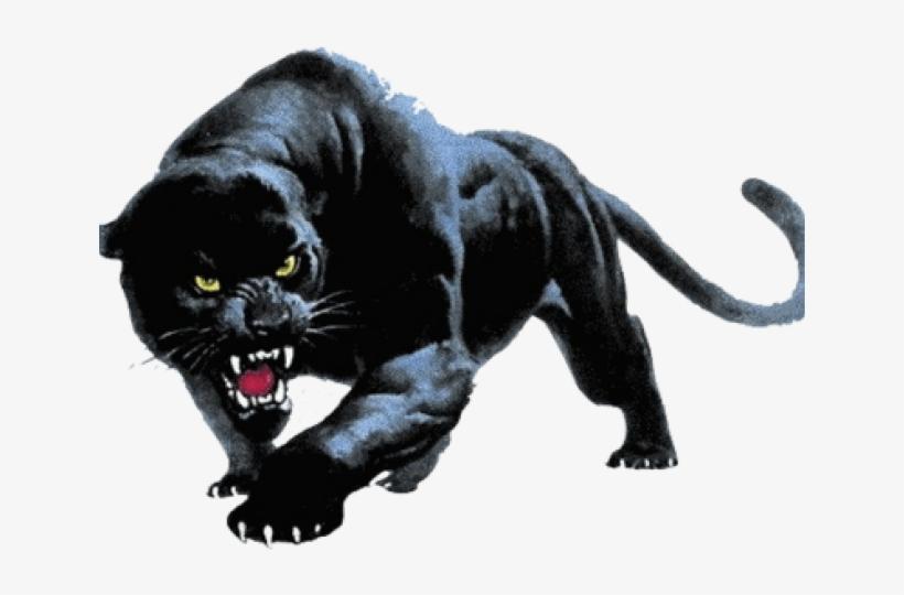 Black Panther Png Transparent Images Devon Meadows Football Club Free Transparent Png Download Pngkey