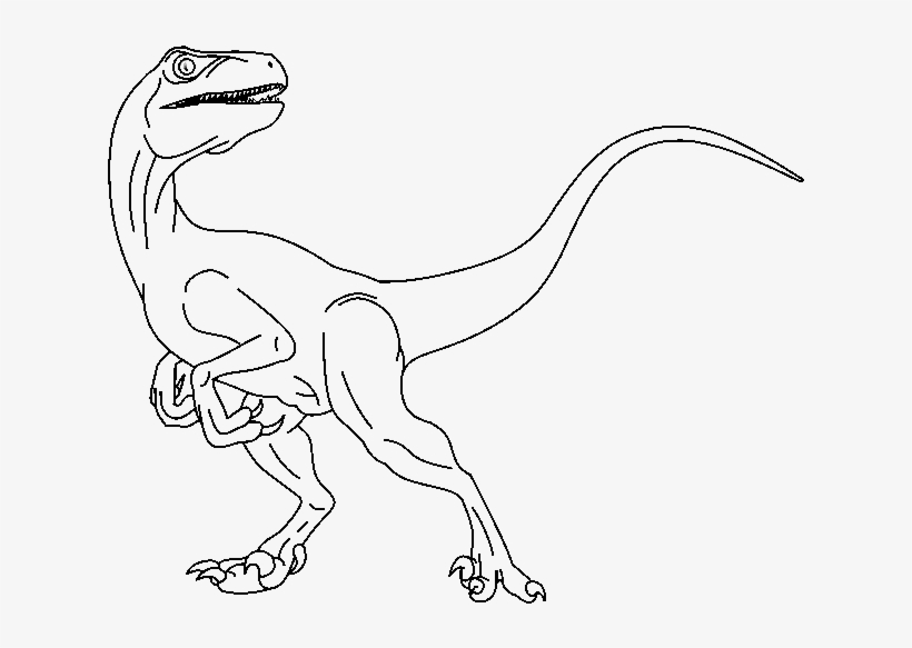 28 Collection Of Raptor Drawing Base - Raptor Drawing, transparent png #1452670