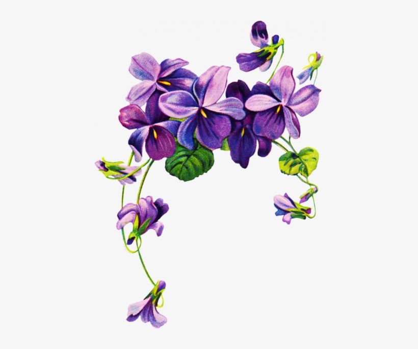 Wildflowers Drawing Purple Flower Border Png Free