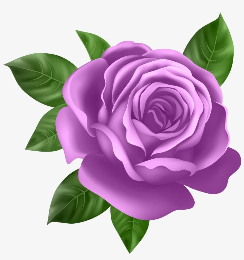 Purple Rose Transparent Png Clip Art Purple Rose Clipart Free