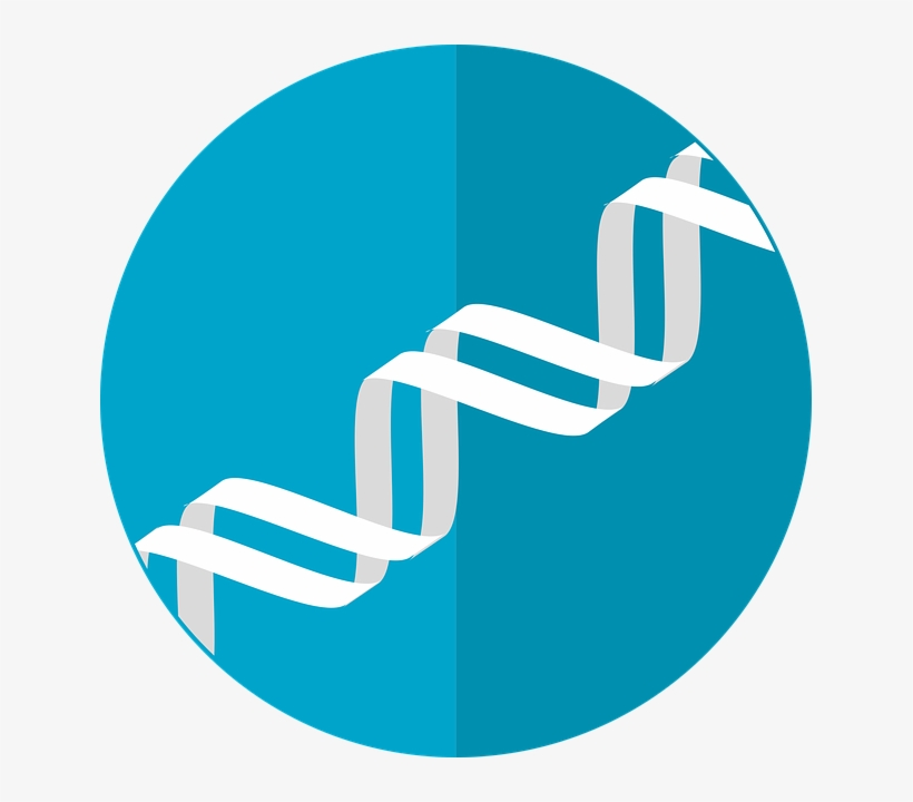 Dna Icon,gene,helix,double - Dna Icon, transparent png #1476930