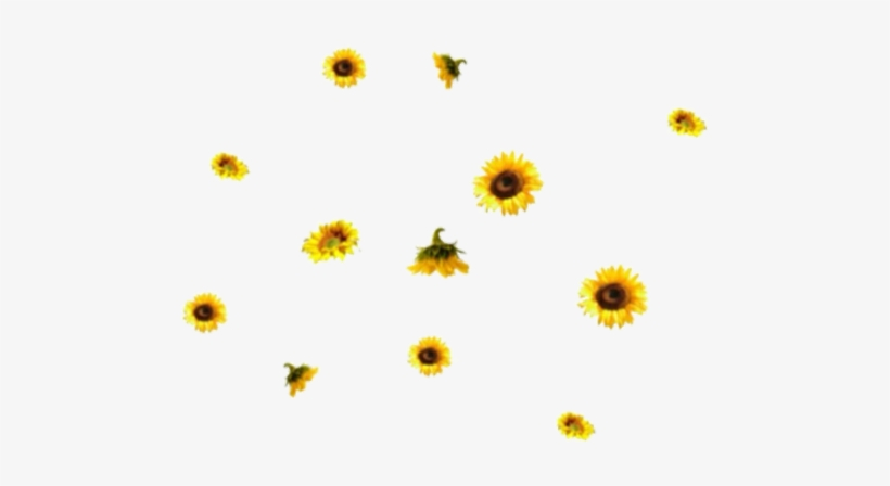 Sunflower aesthetic. Edit png and random